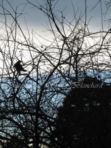 crow-skylar-blanchard